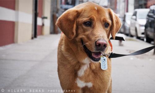 Badass Brooklyn Animal Rescue
